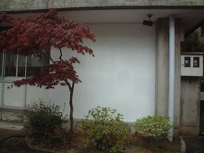 20110428.jpg